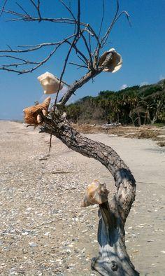 Botany Bay Beach (Plantation) in Edisto, South Carolina