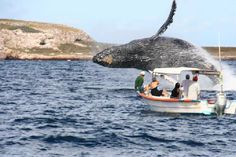 Puerto Vallarta, Mexico: Awesome Whale Sighting