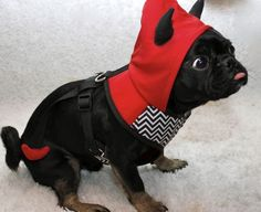 Dress Up Your Pet Day- Kilo the Devil Pug is dressed as a devil because he was busted for various crimes today. Lucky he's so cute.