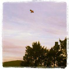 Pájaro artificial en el cielo