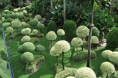 tropical garden - Hledat Googlem