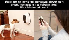 Oh, the future is looking great. This pet-cam is just brilliant…