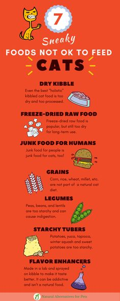 Cat Infographic   Bad Food for Cats   Unnatural ingredients you may not have noticed in your cat's food.