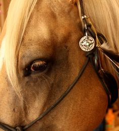 'Protect This Horse' charm. I think Jackson needs one for his bridle!