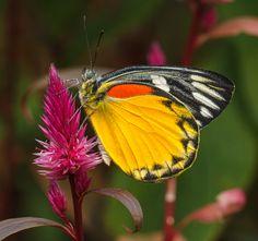 """""""Tropical butterfly """" by John Starkey, via 500px."""