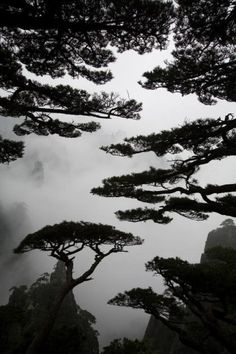 """firsttimeuser: """" Huangshan by Arnd Dewald """" Forest Path, Tree Forest, Beach Photography, Nature Photography, Places Around The World, Around The Worlds, Cool Pictures, Cool Photos, Quelques Photos"""