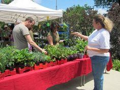 Farmers market coming to Bernice Garden in SoMa Little Rock