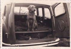 OLD-PHOTO-VINTAGE-CAR-ANIMALS-DOG-HUMOUR-P146