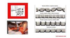 Descargue gratis nuestros patrones de ropa Gratis | Patrones Gratis Sewing, Shopping, Tela, Sewing Patterns, Edible Garden, Learn To Sew, Dresses For Babies, Free Pattern, Dressmaking