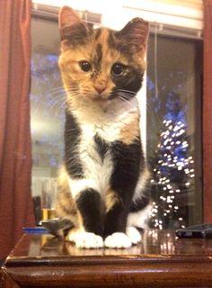 My little girlcat, Jabot!