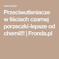 Przeciwutleniacze w liściach czarnej porzeczki-lepsze od chemii!!! | Fronda.pl