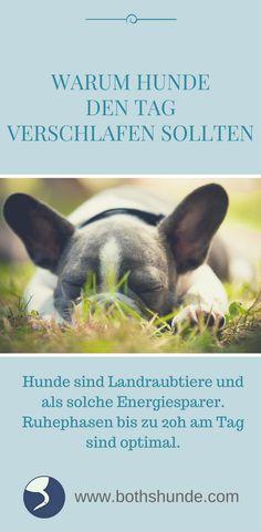 Hunde gehören zu den Landraubtieren und sind als solche Energiesparer. Ruhe- und Schlafphasen sollten ca. 18-20h am Tag einnehmen.