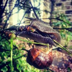 If a snail can climb a tree maybe you can do more than you think