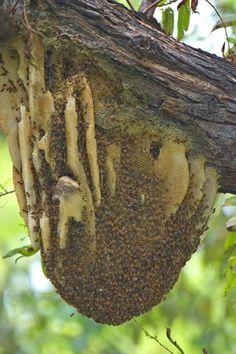 Honey Bee | Visit ampest.typepad.com