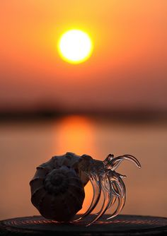 ✮ Amazing Shot of a Hermit Crab living free Beautiful Creatures, Animals Beautiful, Cute Animals, All Gods Creatures, Sea Creatures, All Nature, Science Nature, Foto One, Amazing Photography