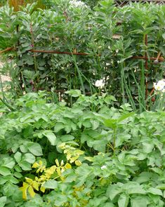 Raspberry Canes, Fruit Cage, Fruits And Vegetables, Gardening Tips, Herbs, Fruits And Veggies, Herb, Spice