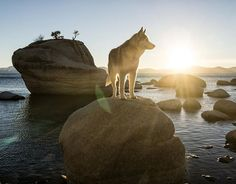 stray: 1. move away aimlessly from a group. 2. to wander; roam.  I guess that makes me a stray. #RenoTahoe @renotahoeusa