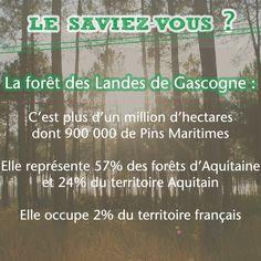 Le Saviez-Vous : La forêt des Landes de Gascogne représente 2% du territoire française et 24% du territoire Aquitain. #pin #forêt #Landes #Aquitaine #Gascogne