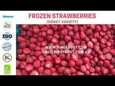 Sinofrost - IQF Whole Strawberries Honey Variety Supplier China Strawberry Puree, Frozen Strawberries, Honey, China, Food, Eten, Meals, Porcelain Ceramics, Porcelain