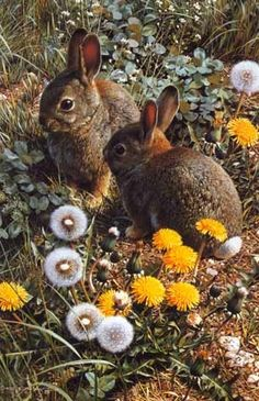 The rabbits will be disappointed this year.  I am not having a garden for them to eat!!!