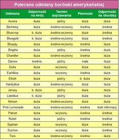 sadzonki borówki amerykańskiej Blueberry, Plants, Sad, Gardening, American, Google, Berry, Lawn And Garden, Plant