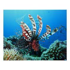 Aquatic Poster -nature diy customize sprecial design