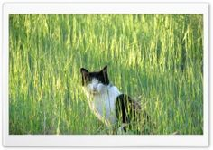 cat.MR HD Wide Wallpaper for Widescreen