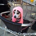 Chicago pet events for Fourth of July week