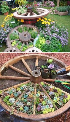 19 Cool Ideas to Create a Round Garden Bed with Recycled Things Recycle an old wagon wheel for a divided succulent or herb garden bed.Recycle an old wagon wheel for a divided succulent or herb garden bed. Garden Planters, Succulents Garden, Herbs Garden, Flowers Garden, Succulent Gardening, Flower Gardening, Diy Jardin, Herb Garden Design, Recycled Garden