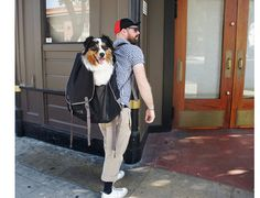 dog-carrier-backpack | Animal Love | Pinterest | Dog stuff, Dogs ...