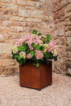 Planter King's Cube | The Garden Shop