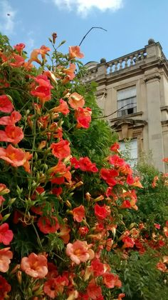 Flowers at King's college, Cambridge