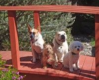 San Luis Obispo California Pet Friendly Hotels Dog Restaurants