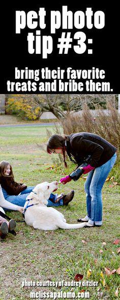 Pet Photography Tips: #3 - Bribe them.
