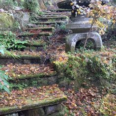 【koyadiy】さんのInstagramをピンしています。 《おはようございます。 来年2017年 ゴールデンウイークに小屋を作りませんか?詳しくはプロフィールWebサイトをご覧ください。  枯朶に烏のとまりけり秋の暮  On the withered branch  A crow has alighted - Nightfall in autumn,  #autumn #森 #間伐材 #岐阜 #杉 #ヒノキ #檜 #板倉 #伝統文化 #DIY #japan #熱海 #伊豆山 #atami #野鳥 #wabisabi #国産材 #柿渋 #タイニーハウス  #ツリーハウス  #木 #diy女子 #桜 #クロモジ #yuica #tinyhouse #japan #相模湾 #初島 #伊豆大島 #wood》