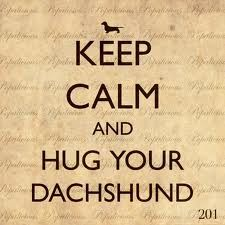 Keep calm and hug a dachshund :)