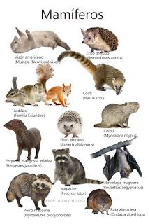 Biología con Sam : Animales Mamíferos Natural Hair Styles, Nature, Poster, Ecuador, Baby, Animal Facts, Party, Birds, Animals