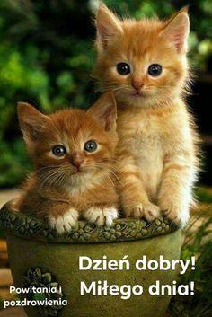 All About Ginger Cats - Kittens Cutest - Katzen Bilder Cute Baby Cats, Kittens And Puppies, Cute Cats And Kittens, Cute Baby Animals, Funny Animals, Adorable Kittens, Funny Kittens, Ragdoll Kittens, Tabby Cats