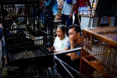 A Couple Bird Cage - This is a traditional market in Jogjakarta, was held only when java traditional date