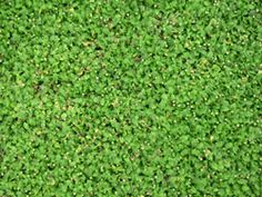 Use green Artificial Turf carpet for your outdoor living space, RV or pool side. Made of UV stabilized Olefin, this soft and comfortable carpet is easy to clean and wont fade. Artificial Grass Rug, Astro Turf, Garden Oasis, Garden Theme, Native Plants, Area Rugs, Carpet, Cover, Outdoor Decor
