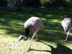 Emoe's in Dierenwijck in Speel en Dierentuin Plaswijckpark.