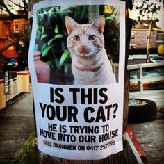 Cat Unwanted via metapicture #Ad #Humor #Cat