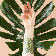 PHILODENDRON MONSTERA BY VINCENT JEANNEROT FROM TATTLY TEMPORARY TATTOOS