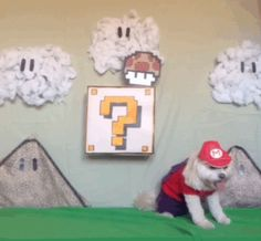 Funny pictures about Super Mario Dogs. Oh, and cool pics about Super Mario Dogs. Also, Super Mario Dogs. Funny Dog Videos, Funny Dogs, Cute Dogs, Funny Animals, Cute Animals, Crazy Animals, Awesome Dogs, Animals Dog, Super Mario