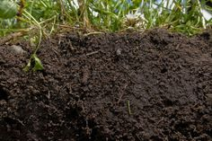 Restoring Our Soils by Learning from History - Cornucopia Institute