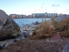 Killingholman saari