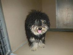 Please help me, I'm in Henderson, NV., Animal Shelter, ID#: A952636.