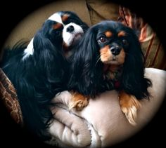 Holley and Bella my sweet baby faces. CKCS