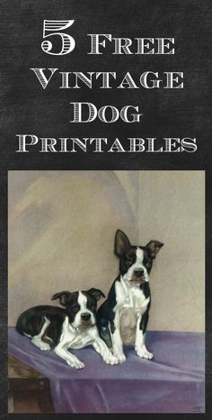 Free printable dog images you can use for crafts or just print our and frame for an extra easy DIY project!