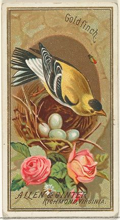 Goldfinch, from the Birds of America series (N4) for Allen & Ginter Cigarettes Brands, 1888. The Metropolitan Museum of Art, New York. The Jefferson R. Burdick Collection, Gift of Jefferson R. Burdick (63.350.201.4.3)